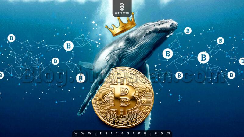 نهنگ بیتکوین